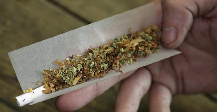 6638 dutch-cannabis-20120501-b-aap