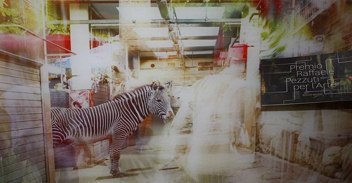 zebra vanvitelli