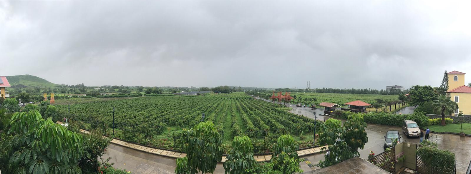 vini indiani immagine